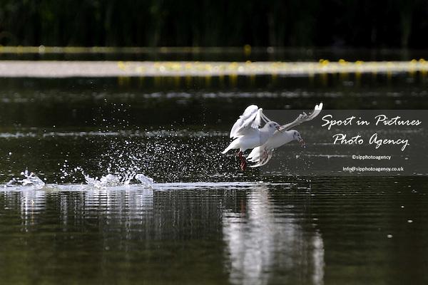 Belhus Park. 15/08/2008. Credit Sportinpictures/Garry Bowden
