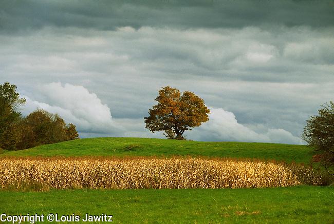 Sky Tree Field Cow