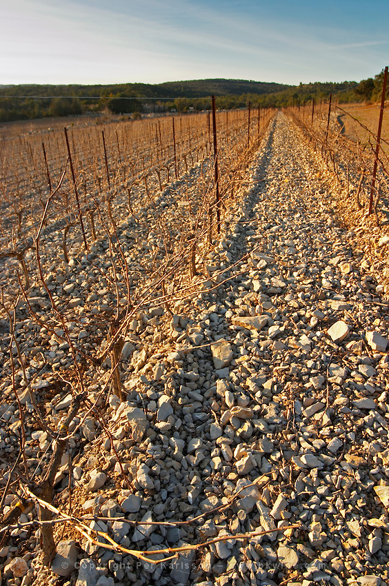 Domaine de Mas de Martin, St Bauzille de Montmel. Gres de Montpellier. Languedoc. Terroir soil. In the vineyard. France. Europe. Soil with stones rocks. Calcareous limestone.