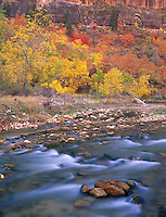 Zion National Park, UT<br /> The Virgin River flows beneath a hillside of autumn colored trees near Big Bend in Zion Canyon