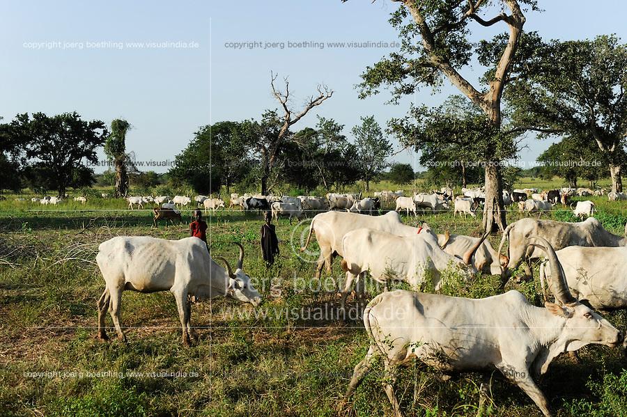 SOUTH SUDAN  Bahr al Ghazal region , Lakes State, Rumbek, Dinka shepherd with grazing Cebu Cows / SUED-SUDAN  Bahr el Ghazal region , Lakes State, Rumbek , Zeburinder Herde