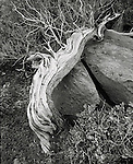 August, 2005. Driftwood at the beach near the surfing village of Troncones, in Guerro, Mexico.