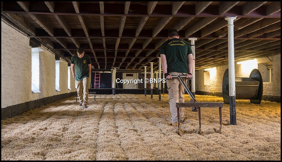 BNPS.co.uk (01202 558833)<br /> Pic: Phil Yeomans/BNPS<br /> <br /> Turning the malting barley...<br /> <br /> The first of this years crop of top quality brewing barley is being malted at Britains oldest maltings in Warminster in Wiltshire.<br /> <br /> In continuous use since 1855, the purpose built malthouse produces 10 tons of the precious Maris otter malt every 3-5 days at this time of year as the fresh harvest is finally ready for the ancient process.