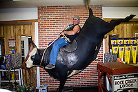 A man poses for a picture on a taxidermied bucking bull at the Testicle Festival at the Rock Creek Lodge in Clinton, MT.  The Rock Creek Lodge in Clinton, MT, has hosted the annual Testicle Festival since the early 1980s.  The four day festival and party revolves around the consumption of so-called Rocky Mountain Oysters, which are deep-fried bull testicles.