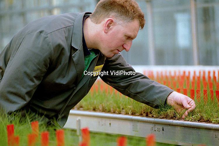 Foto: VidiPhoto..WOLFHEZE - Bij het onderzoeksbedrijf in Wolfheze van grasveredelaar Barenbrug wordt op dit moment samen met het Landbouw Universiteit van Wageningen onderzocht welk soort gras de meeste melk oplevert bij koeien. De voederwaarde van tientallen soorten gras wordt nauwkeurig bijgehouden. Daar moet straks dan een supergras uit rollen. Daarnaast wordt gewerkt aan een grassoort die resisstent is tegen de zogenoemde zwarte roest. Die ziekte maakt het gras minder smakelijk, waardoor de dieren het links laten liggen.