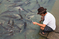 man feeding catfish, Ayutthaya, Thailand