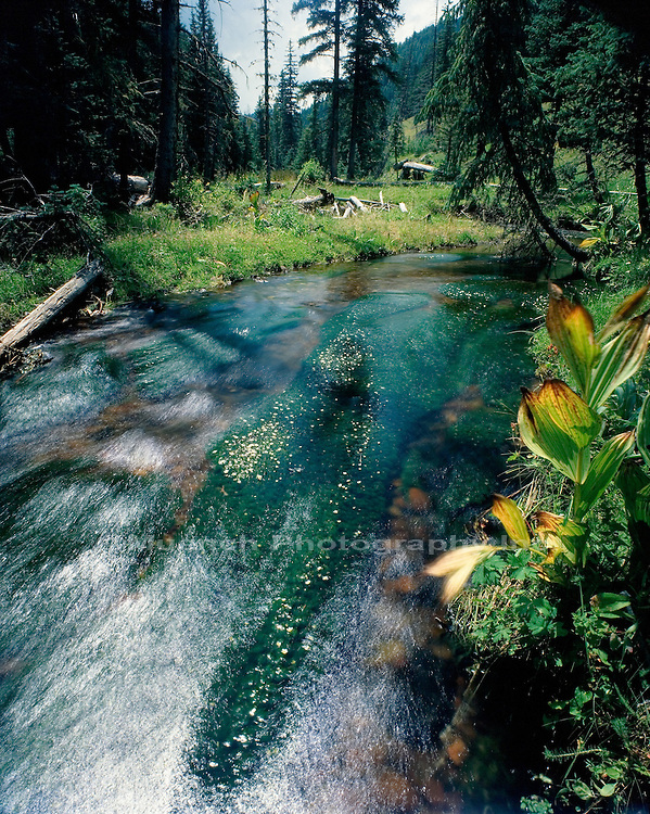 Headwaters of the Little Colorado River   ARIZONA, White Mountains