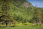 Evans Brook forms a wet meadow at Evans Notch, White Mountain National Forest, ME