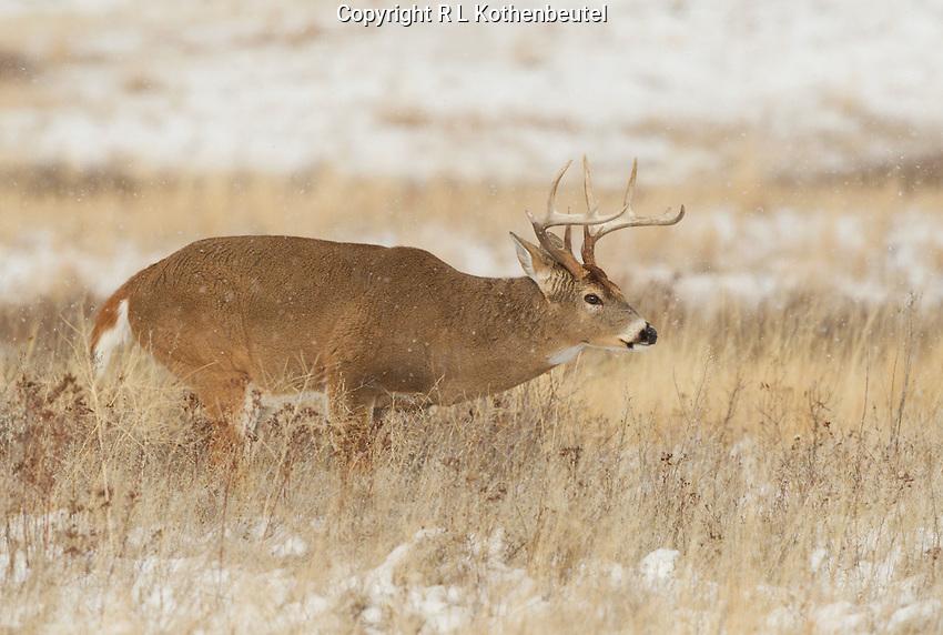 Bison Range near St. Ignatius, Montana<br /> 11/14/2014