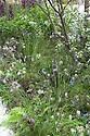 RBC Blue Water Roof Garden, designed by Professor Nigel Dunnett, RHS Chelsea Flower Show 2013.
