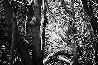 Lemur, Denver Zoo