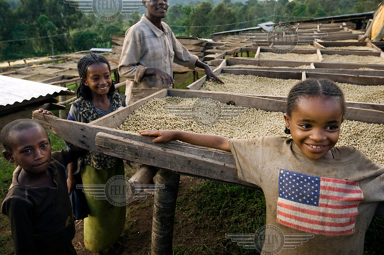 A young girl wearing a t-shirt emblazoned with an American flag helps to turn and grade Arabica coffee beans on the drying installations at a coffee processing facility supported by the Oromia Coffee Farmers Cooperative Union (OCFCU). OCFCU, established in 1999, helps farmers to implement fair trade and organic working practices in the renowned Yirgacheffe coffee-growing region.