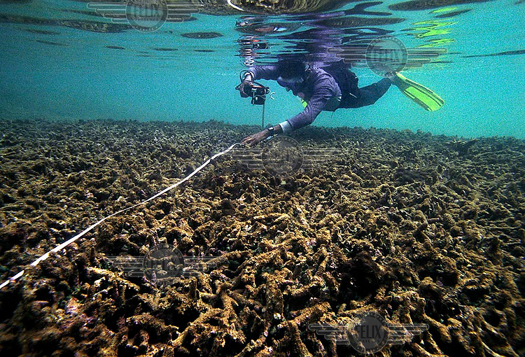 Dead corals. This coral reef bleached and died in 1998 due to rise in water temperature, again believed to be caused by global warming. When inspected a year later by marine biologists, no recovery was detected.