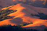 Sunset light on oak and grass hills of Briones Regional Park, near Orinda, Contra Costa County, CALIFORNIA