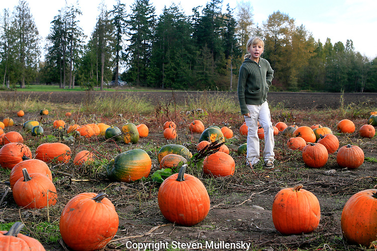 A young girl has a hard time deciding what pumpkin to pick from among the many choices available.