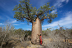 Baobab nearby Andavadaoka