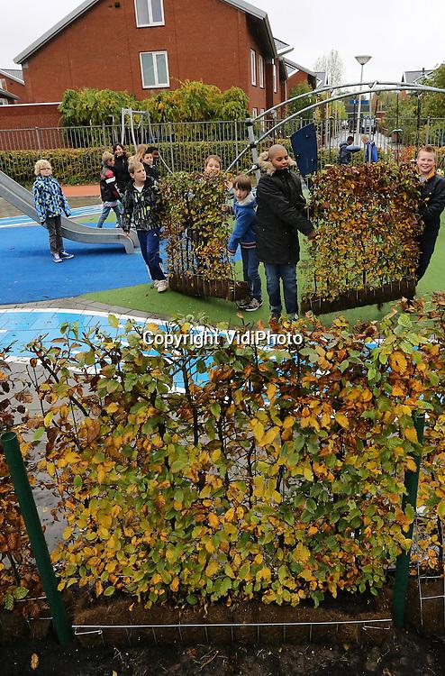 Foto: VidiPhoto<br /> <br /> AMERSFOORT - Leerlingen van de Micha&euml;lschool in Amersfoort helpen maandag bij het plaatsen van de groene hagen van groenspecialist Mobilane uit Leersum. In het kader van &quot;Gezonde School&quot; worden maandag de pleinen van twee basisscholen in Amersfoort voorzien van groene hagen. De Micha&euml;l- en Kingmaschool in Amersfoort zijn de eerste scholen in Nederland die het landelijke vignet &quot;Gezonde School&quot; ontvangen. Scholen moeten daarbij voldoen aan 'basisvoorwaarden' als gezonde tractaties, meer sport en beweging en veel frisse lucht in de klas. Scholen, gemeenten, GGD en Longfonds werken in dit project samen.