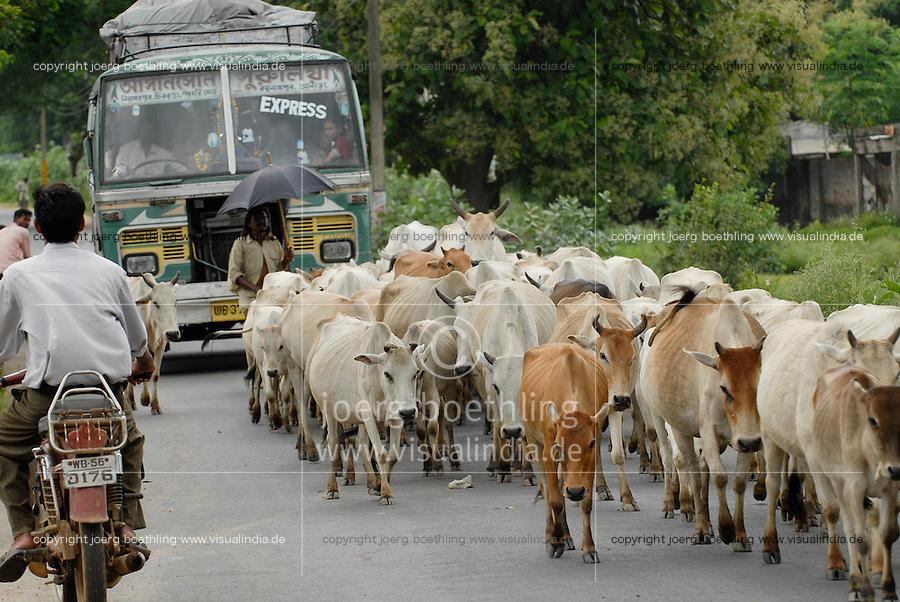 Asien Suedasien Indien Westbengalen , Kuhherde blockiert den Strassenverkehr - Transport Infrastruktur xagndaz   .South asia India Westbengal , cow herd blocks road  - transport infrastructure