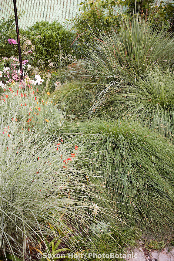 Meadow garden with ornamental grasses; variegated foliage Miscanthus 'Morning Light', sedge Carex divulsa and Tripsacum dactyloides