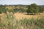 Countryside near Ilam, Peak District national park, Derbyshire, England