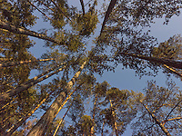 FOREST_LOCATION_90043
