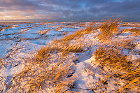Warm sunset light falls on the grasses of the tundra on Barter Island in Alaska's arctic.