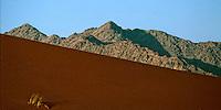 Namib Desert Namibia, 2000