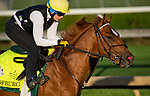 LOUISVILLE, KY - MAY 01: Hofburg, trained by Bill Mott, exercises in preparation for the Kentucky Derby at Churchill Downs on May 1, 2018 in Louisville, Kentucky. (Photo by John Voorhees/Eclipse Sportswire/Getty Images)