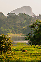 Sri Lanka-Yala National Park