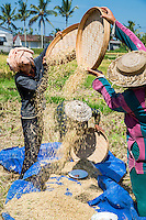Bali, Indonesia.  Women Sifting Rice from Chaff.