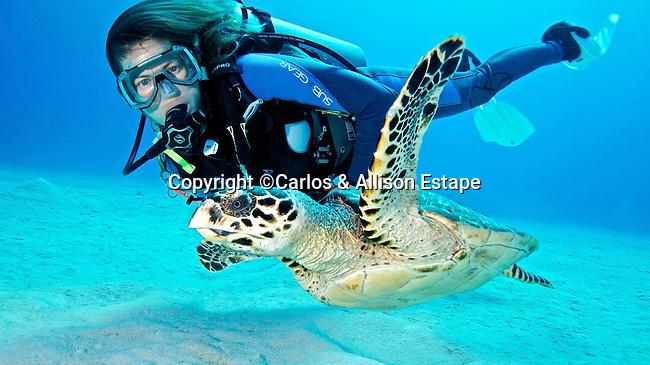 Eretmochelys imbricata, Hawksbill turtle, Grand Cayman
