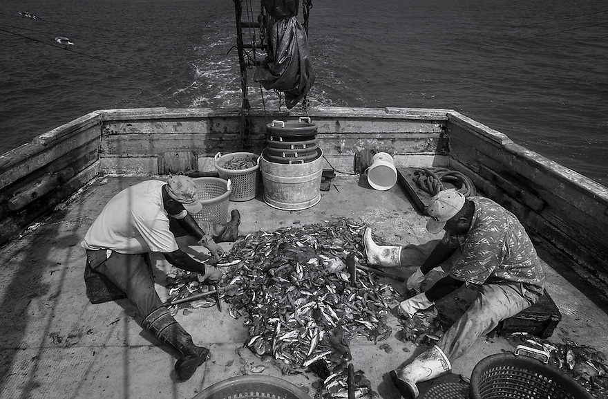 Shrimpers Diogenese Miller and Eugene Orage separate the shrimp from the fish caught in their nets while fishing the waters off of Hilton Head Island, South Carolina.