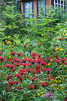 Monarda didyma (crimson beebalm, scarlet beebalm, scarlet monarda, Oswego tea, or bergamot), red flowering perennial wildflower in Connecticut meadow garden with native plants;Larry Weaner Design