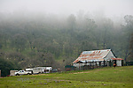 """Cattle marking and branding with the Dell""""Orto family in the Sierra Nevada Foothills of California. (Mattley Barn)..**usage by any anti-livestock individual, group, publication, websites, e-mail or anything similar is prohibited."""