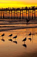 Newport Beach Pier at Sunset