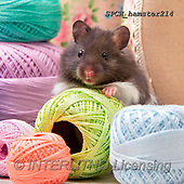 Xavier, ANIMALS, REALISTISCHE TIERE, ANIMALES REALISTICOS, photos+++++,SPCHHAMSTER214,#A#, EVERYDAY ,funny