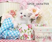 Xavier, ANIMALS, cats, photos, SPCHCATS709,#A# Katzen, gatos