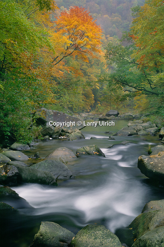 Red maple in Nantahala River Gorge<br />