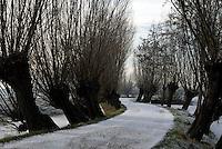 Knotwilgen winterbeeld