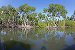 Mangroves, Los Haitises