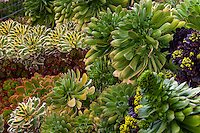 Succulent foliage tapestry in garden bed