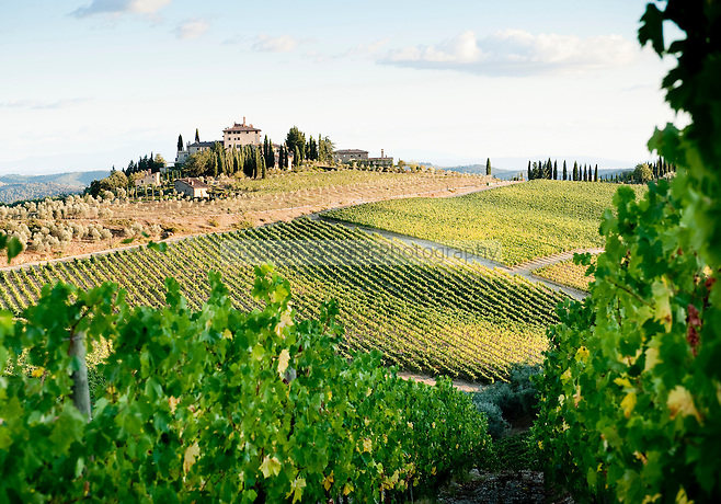 Vineyards in the rolling hills of Chianti, near Radda, Tuscany, Italy