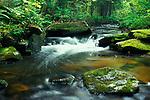 Seasonal Stream through Deciduous Woodland, Ontario, Rocks, running water, flowing, green