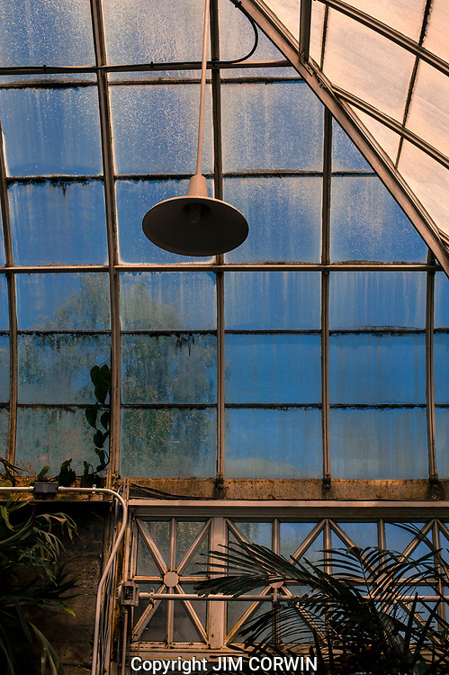 Greenhouse Window Abstract