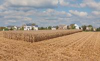 Partially Harvested Corn Field next to a Suburban Neighborhood