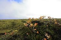 Lava,Field,Fields, Iceland