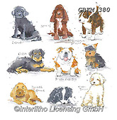 Kate, CUTE ANIMALS, LUSTIGE TIERE, ANIMALITOS DIVERTIDOS, paintings+++++New Breeds cats,GBKM380,#ac#, EVERYDAY ,dogs,dog