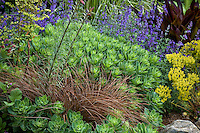 Perennial border garden with Sedum 'Autmn Joy', bronze foliage Carex tenuiculmis  New Zealand Hair Sedge, Nepeta and Euphorbia, Digging Dog Nursery
