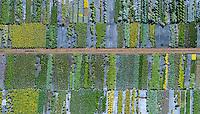 Vegetable patch. Canon City, Colorado.  Aug 2014