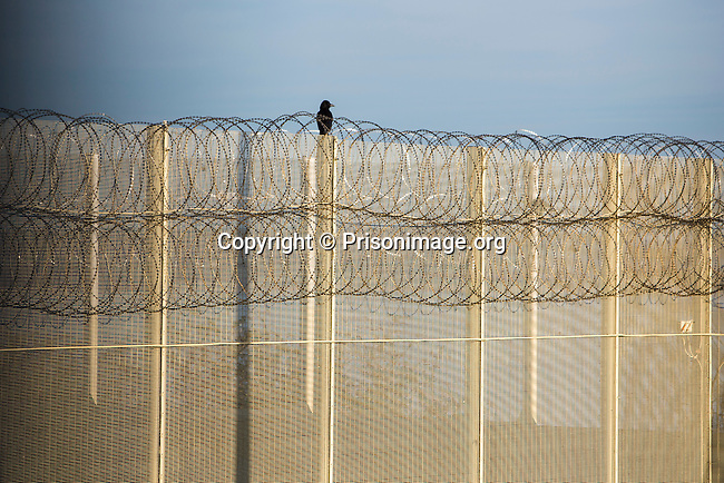A crow sitting on a security fence. HMP/YOI Portland, a resettlement prison with a capacity for 530 prisoners. © prisonimage.org.  Any image use must be agreed first. All images must be credited.